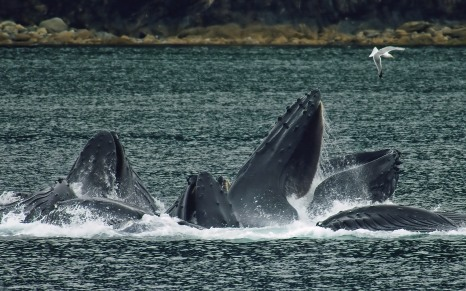 Group of whales.jpg