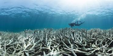 028_coral_bleaching_at_heron_island