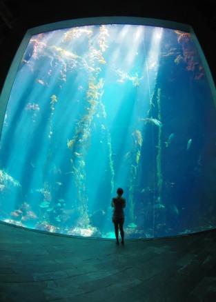 Kelp_Forests,_National_Museum_of_Marine_Biology_and_Aquarium_20130825.jpg