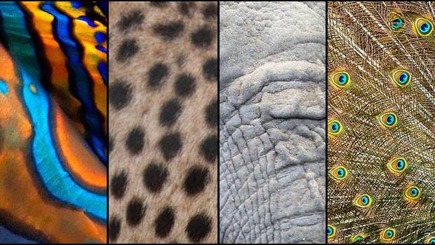 patterns.jpg.620x0_q80_crop-smart_upscale-true.jpg